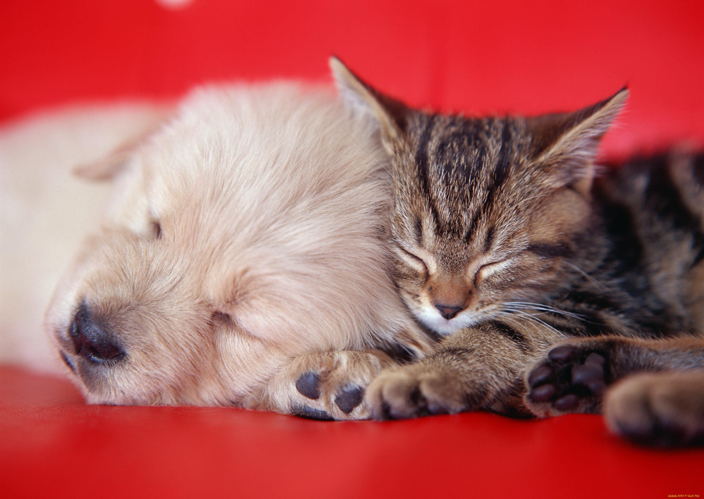 припуском, картинки котята милые и щенят очень